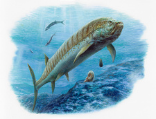 Xiphactinus fish, illustration