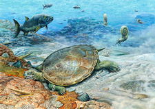 Hylaeochelys turtle in a Cretaceous sea, illustration