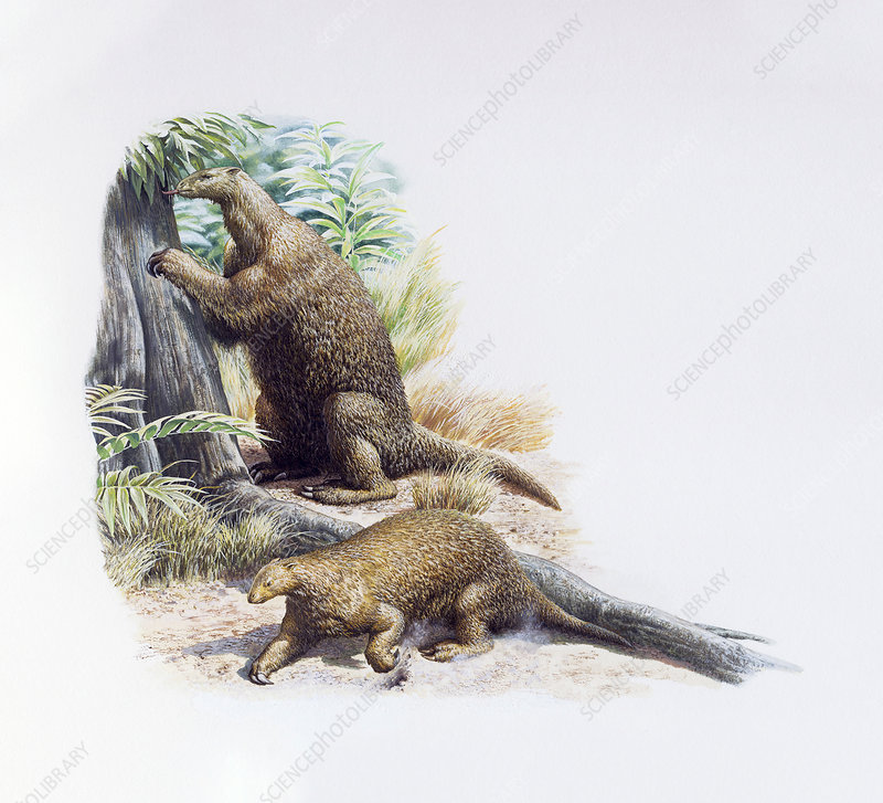Hapalops ground sloths, illustration