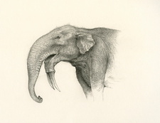 Deinotherium elephant-like mammal, illustration