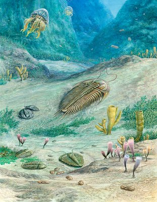Cambrian marine organisms, illustration