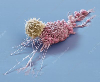 Cancer immunotherapy, SEM