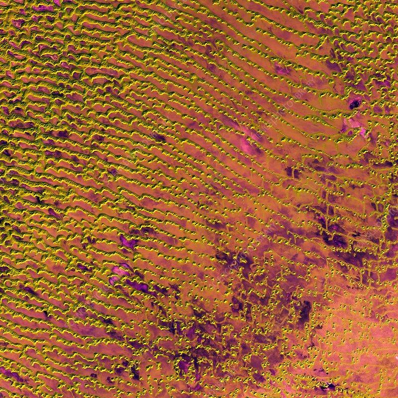 Rub al khali desert arabian peninsula satellite image stock rub al khali desert arabian peninsula satellite image sciox Images