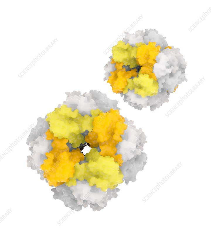 RuBisCO carbon fixation enzyme molecules, illustration