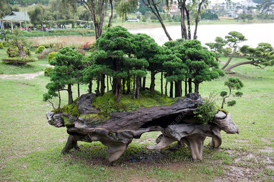Bonsai forest landscaping feature