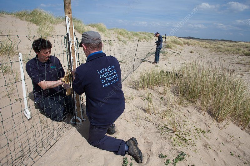 Protecting little tern nesting area