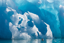 Blue iceberg and fulmar, Svalbard