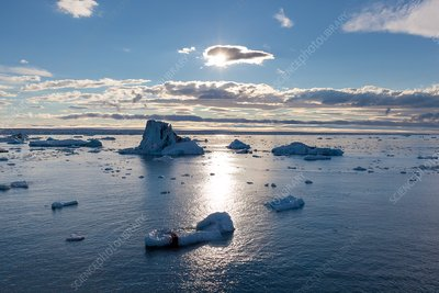 Icebergs under midnight sun, Svalbard