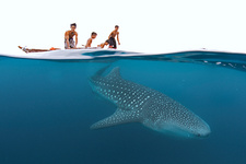Whale shark and kids
