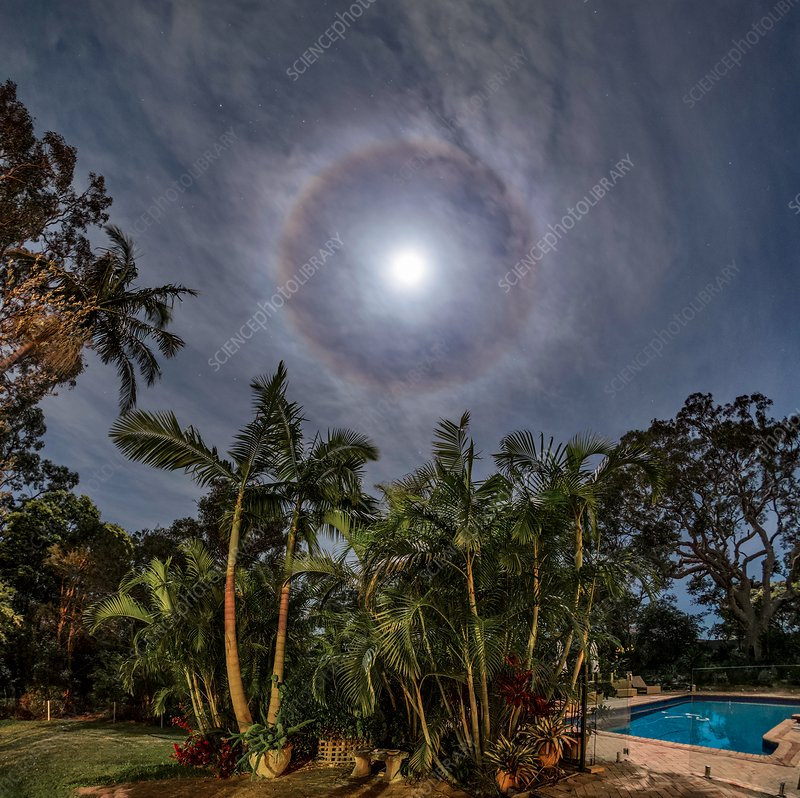 Moon halo above palm trees