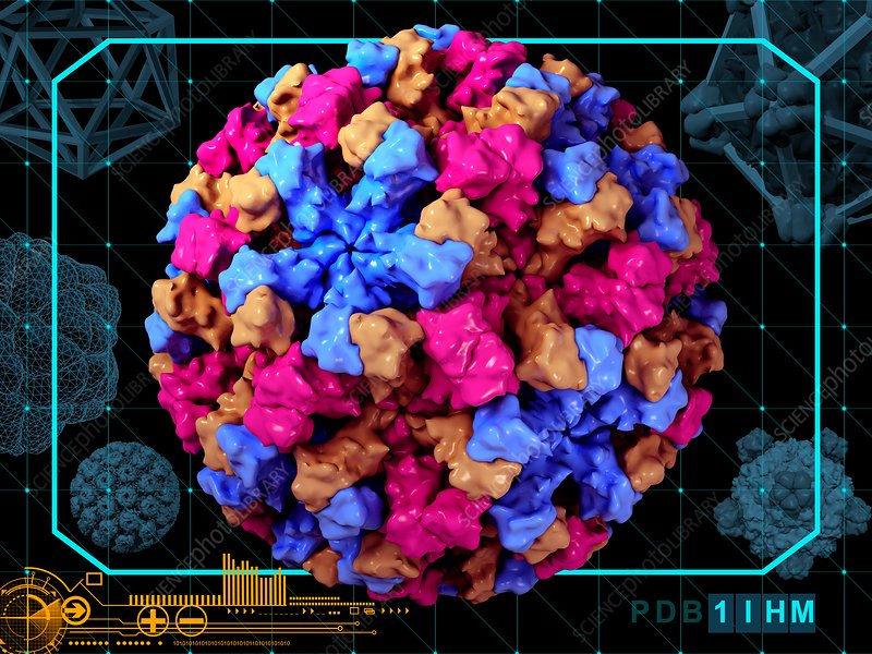 Norwalk virus capsid