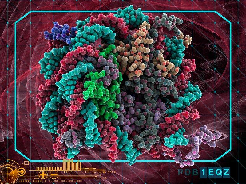 DNA nucleosome, molecular model