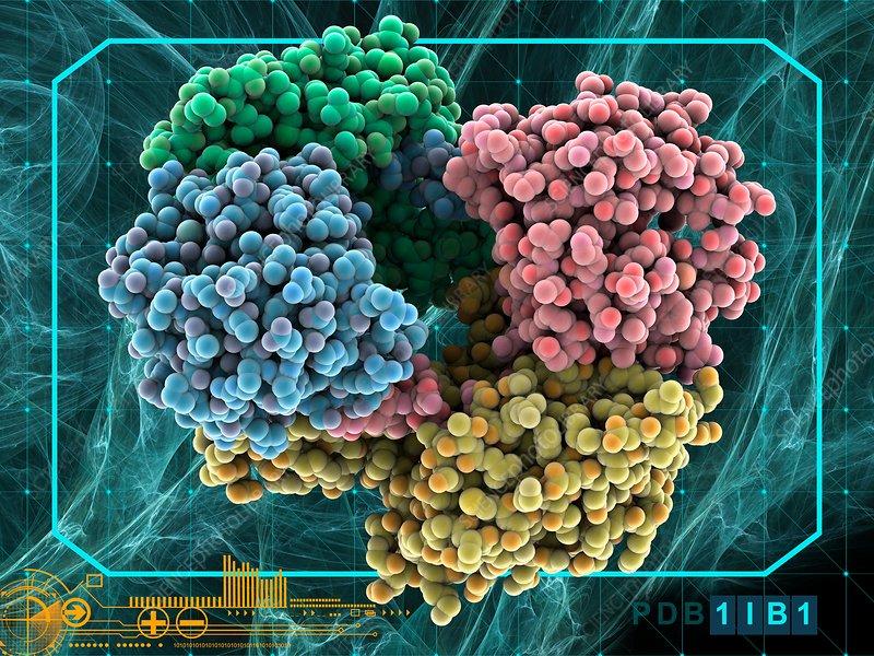 Serotonin N-acetyltransferase complex