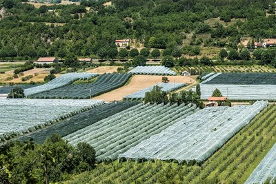 Netted apple orchard, Provence, France