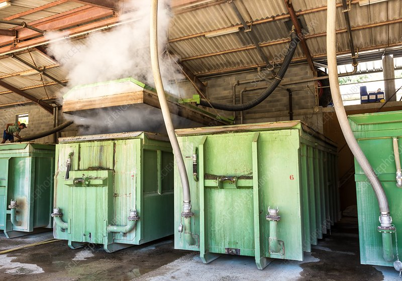 Lavandin lavender steam processing