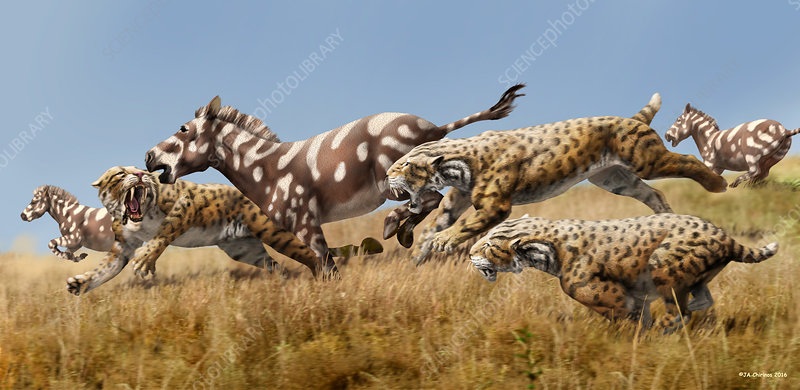 Scimitar cats chasing prey, illustration
