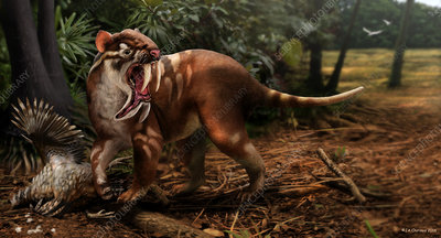 Prehistoric sabre-toothed marsupial, illustration