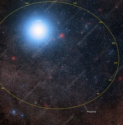 Future orbital path of Proxima Centauri