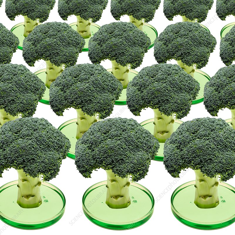 Laboratory-grown broccoli, conceptual image