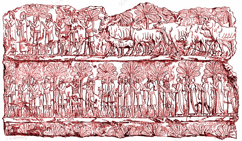 Ancient Assyrian bas relief, illustration