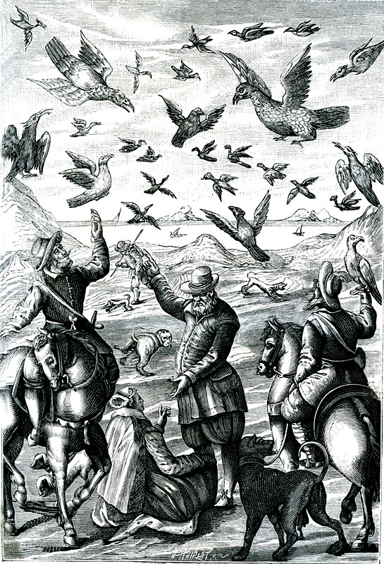 19th Century falcon hunting, illustration