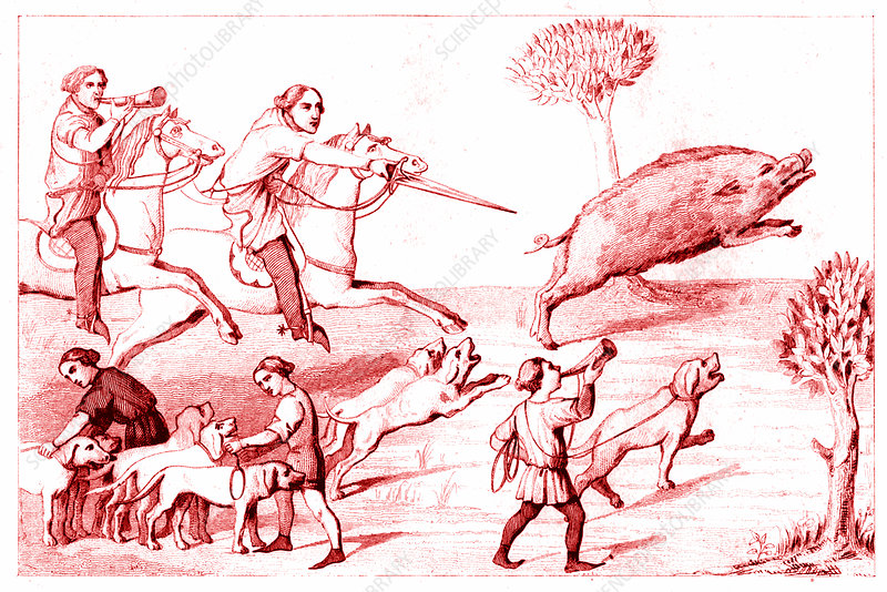 19th Century boar hunting, illustration