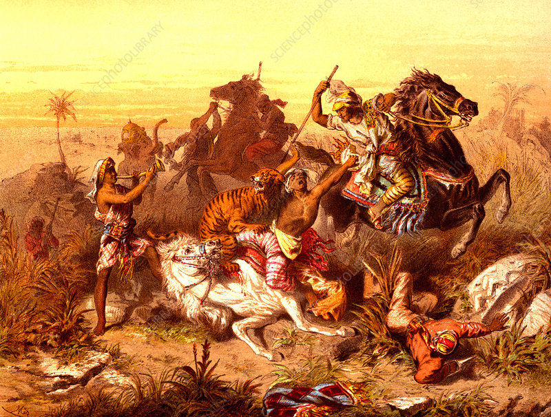 19th Century tiger hunting, illustration