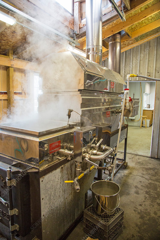 Maple syrup production, wood-fired boiler