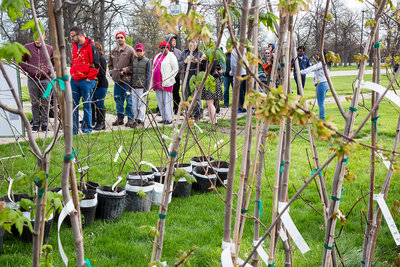 Free tree replacement program, Detroit, USA