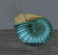Jurassic Ammonite, Illustration
