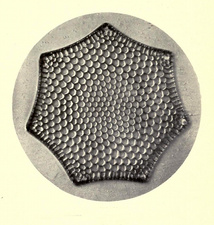 Diatom, Triceratium Favus, Early Photomicrograph