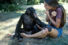 Nim Chimpsky with trainer