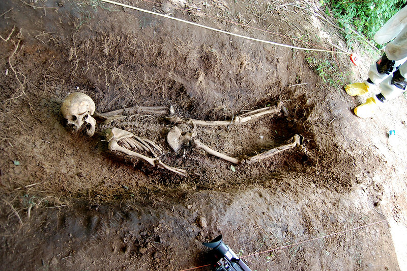 Body Farm, Excavated Human Remains, 2009 - Stock Image
