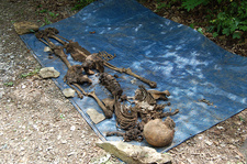 Body Farm, Excavated Human Remains, 2009