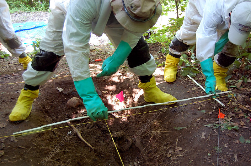 Body Farm, Measuring Human Remains, 2009