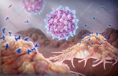 Monoclonal Antibodies and T Cells