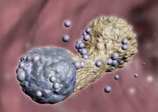 Cytotoxic T Cell Attacking Cancer, Illustration