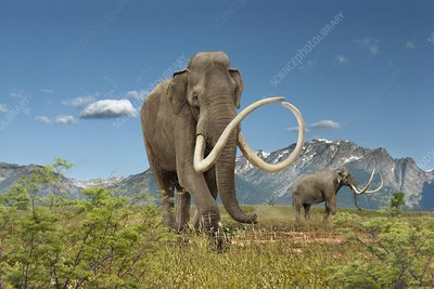 Imperial mammoth, illustration