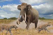 Steppe mammoth, illustration