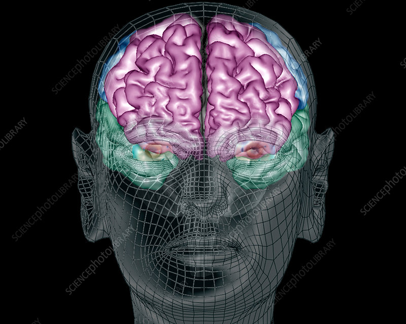 Human brain 3d mri scan stock image c0366965 science photo library human brain 3d mri scan ccuart Choice Image