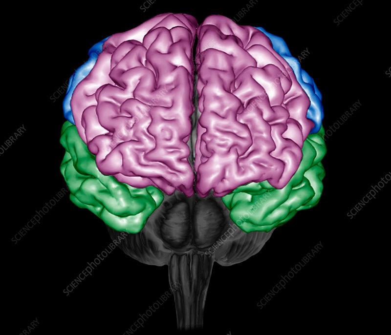Human brain 3d mri scan stock image c0366968 science photo library human brain 3d mri scan ccuart Image collections
