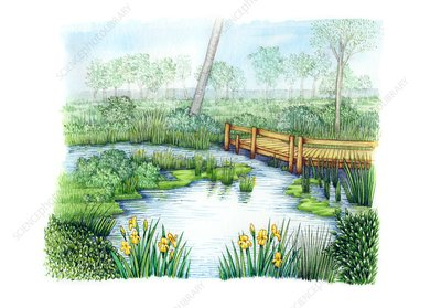 Pond in meadow, illustration