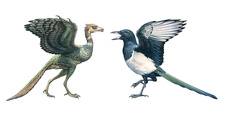 Archaeopteryx and a magpie, illustration