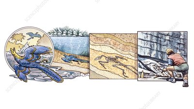 Formation and discovery of fossils, illustration