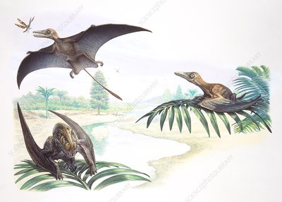Sordes and Batrachognathes pterosaurs, illustration