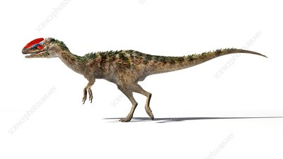 Guanlong dinosaur, illustration
