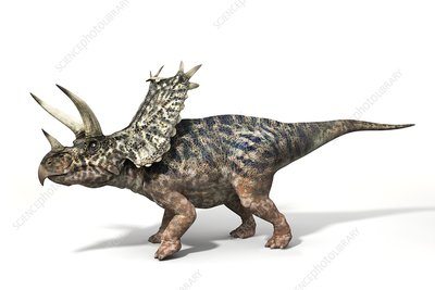 Pentaceratops dinosaur, illustration