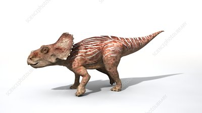 Sinoceratops baby dinosaur, illustration