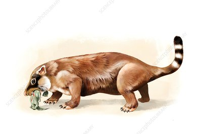 Repenomamus prehistoric mammal, illustration