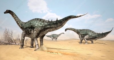 Lohuecotitan dinosaurs laying eggs, illustration